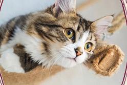 lady dinahs cat emporium london