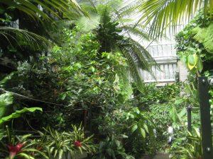 barbican conservatorium
